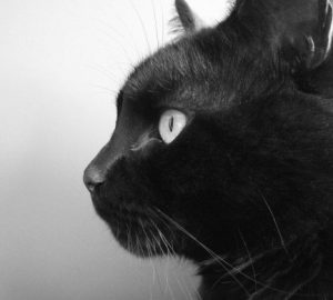Spiritual meaning of seeing a black cat