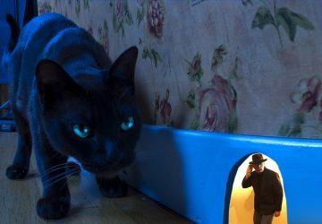 Black Cat Dream Meaning