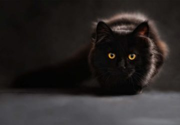 Black Cat Spiritual Message