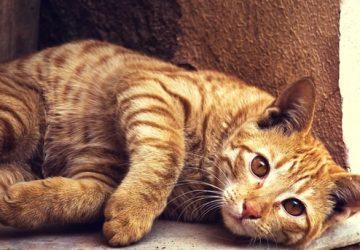 Orange Cat Symbolism