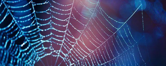 spider spirit animal- Spider web