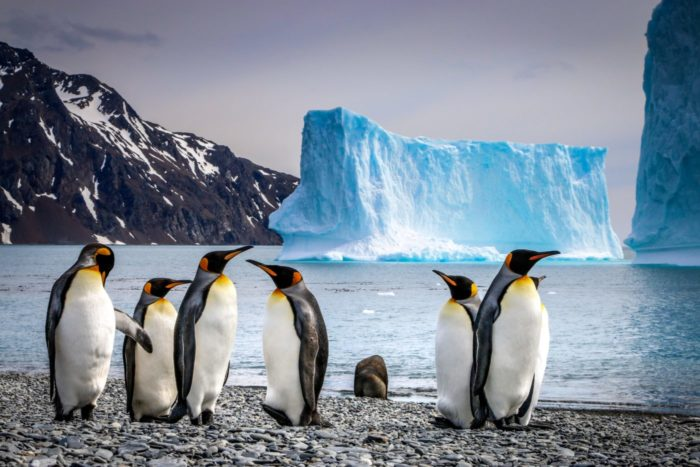 Penguin Spirit Animal Meaning - penguins in the arctic